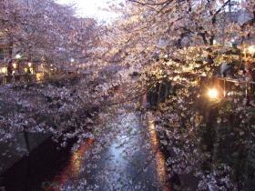 2008_0405spring_sakura0208.jpg