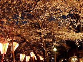 2008_0405spring_sakura0235m.jpg