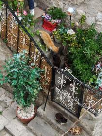 Dubrovnikの猫⑬
