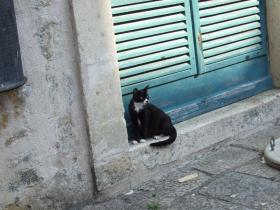 Dubrovnikの猫⑤