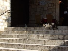 Dubrovnikの猫⑥