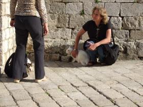 Dubrovnikの猫⑦