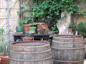 Dubrovnikの猫⑧