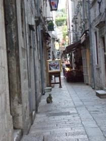 Dubrovnikの猫⑩