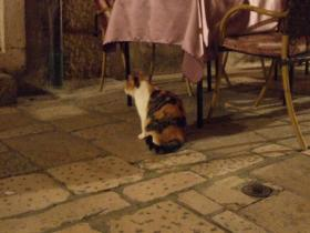 Dubrovnikの猫③