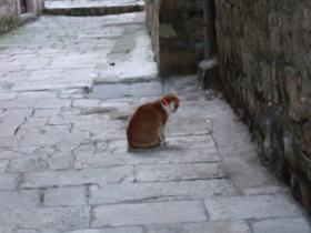 Dubrovnikの猫⑪
