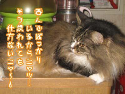 0-1_20080430183605.jpg