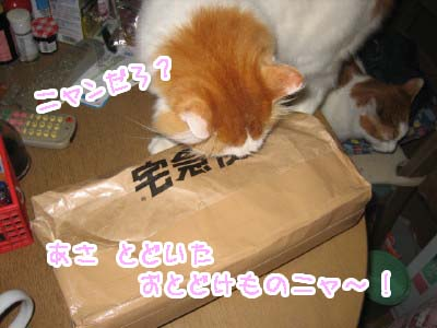 0-1_20080501105412.jpg