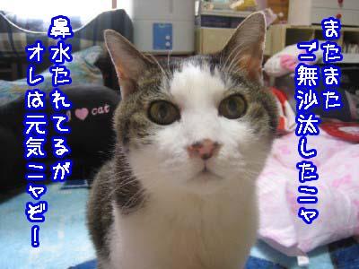 0-1_20080512121807.jpg
