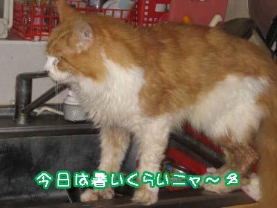 0-1_20080523115743.jpg