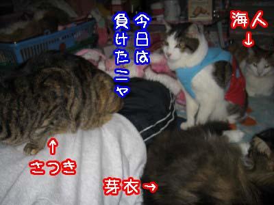 0-2_20080420190158.jpg