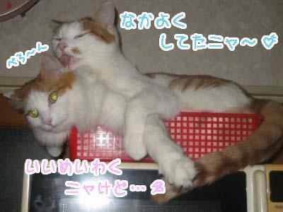 0-3_20080607113409.jpg