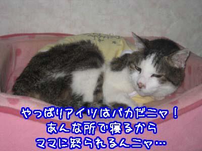 0-4_20080609112529.jpg