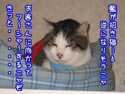 0-5_20080520102333.jpg