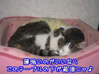 0-5_20080609112552.jpg