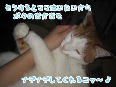 0-8_20080612121345.jpg