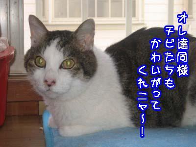 0-9_20080708150448.jpg