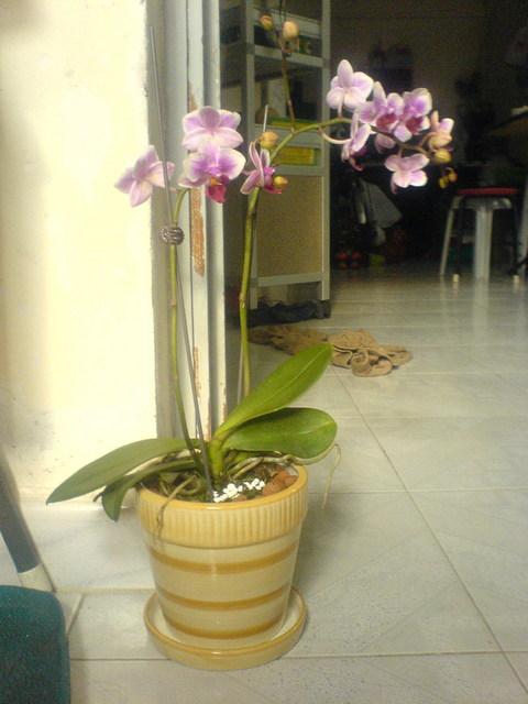 flower-o.jpg