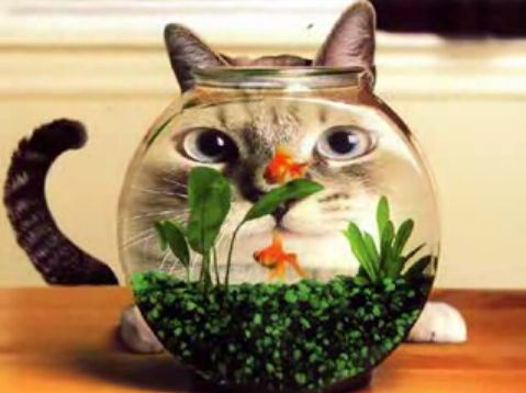 金魚鉢と猫