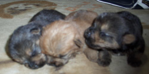 pola-puppy4.jpg