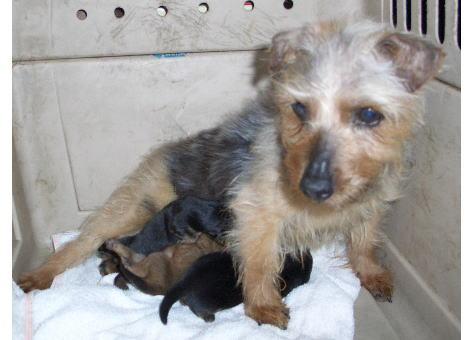 ポーラとニールの子犬