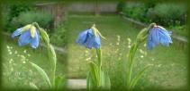 DSCF6887 2008.05.09