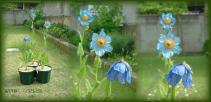 DSCF6955 2008.05.09