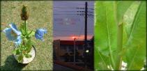DSCF7541 2008.05.16
