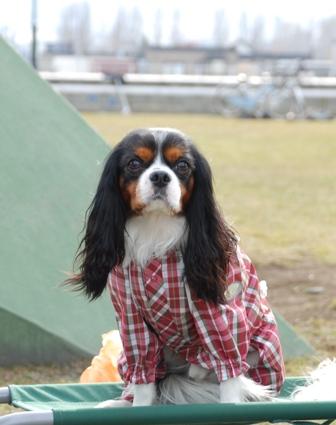 僕はベンチ犬