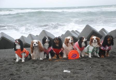 海岸だよ!全員集合