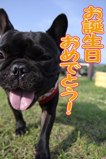 chacolog 「ベリーちゃんお誕生日おめでとう!」
