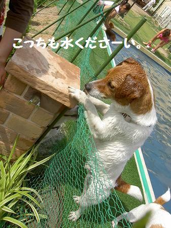 s-PICT6998.jpg