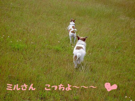 s-PICT7064.jpg