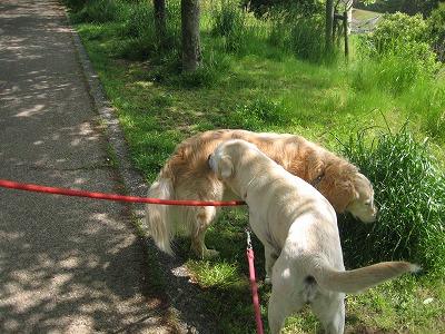 グリちゃんとお散歩