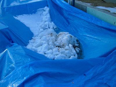養生シートの上の雪