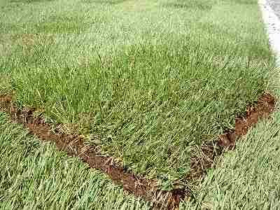 カットされた芝