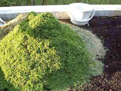 芝の刈り屑