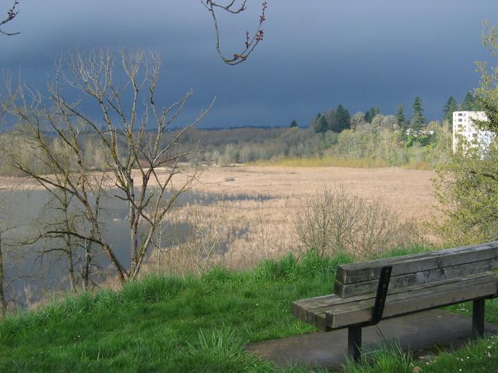 Sellwood 椅子
