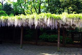 20080506_fuji-all.jpg