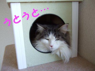 2006_0802photo0138.jpg