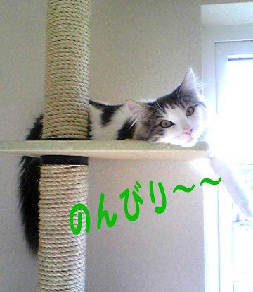 Image013aa.jpg