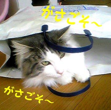 Image056c.jpg