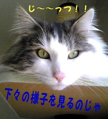 Image065b.jpg