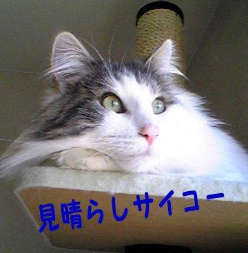 Image066c.jpg