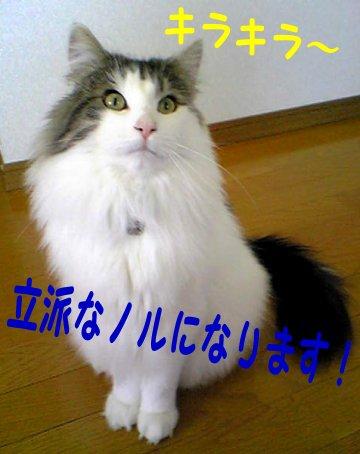 Image077a.jpg
