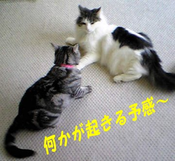 Image088aa.jpg
