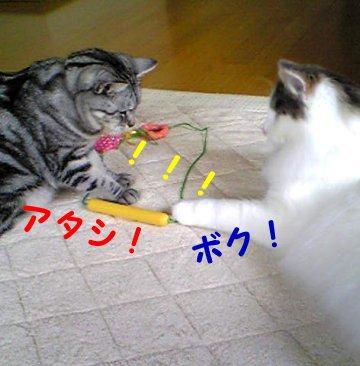 Image108b.jpg