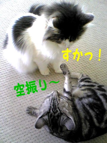Image126d.jpg