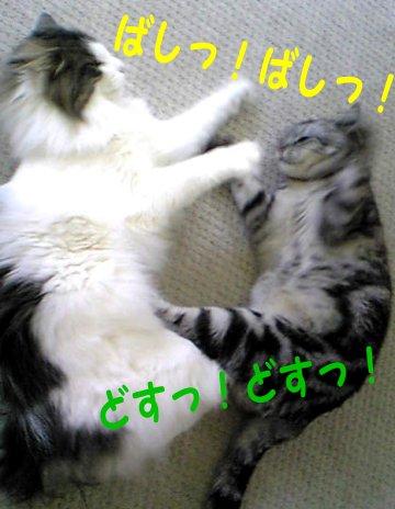 Image127e.jpg