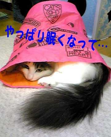 Image145c.jpg